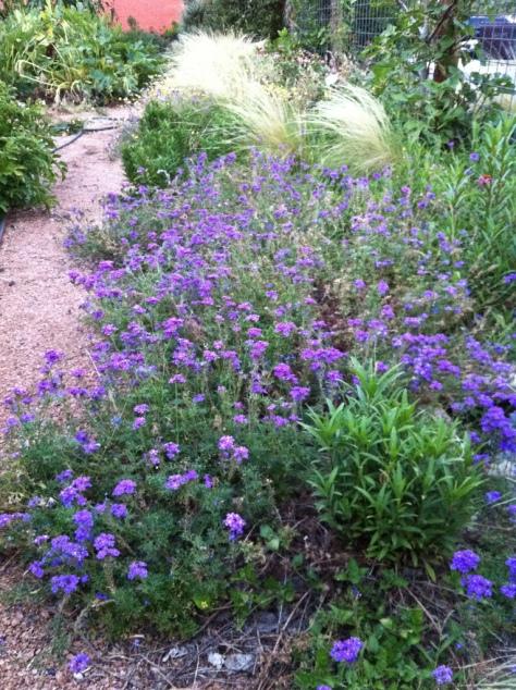 Herb Garden at Fonda San Miguel